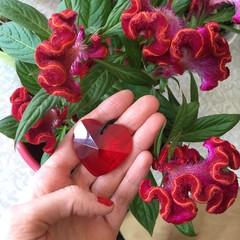 Srdce Rumělka červené